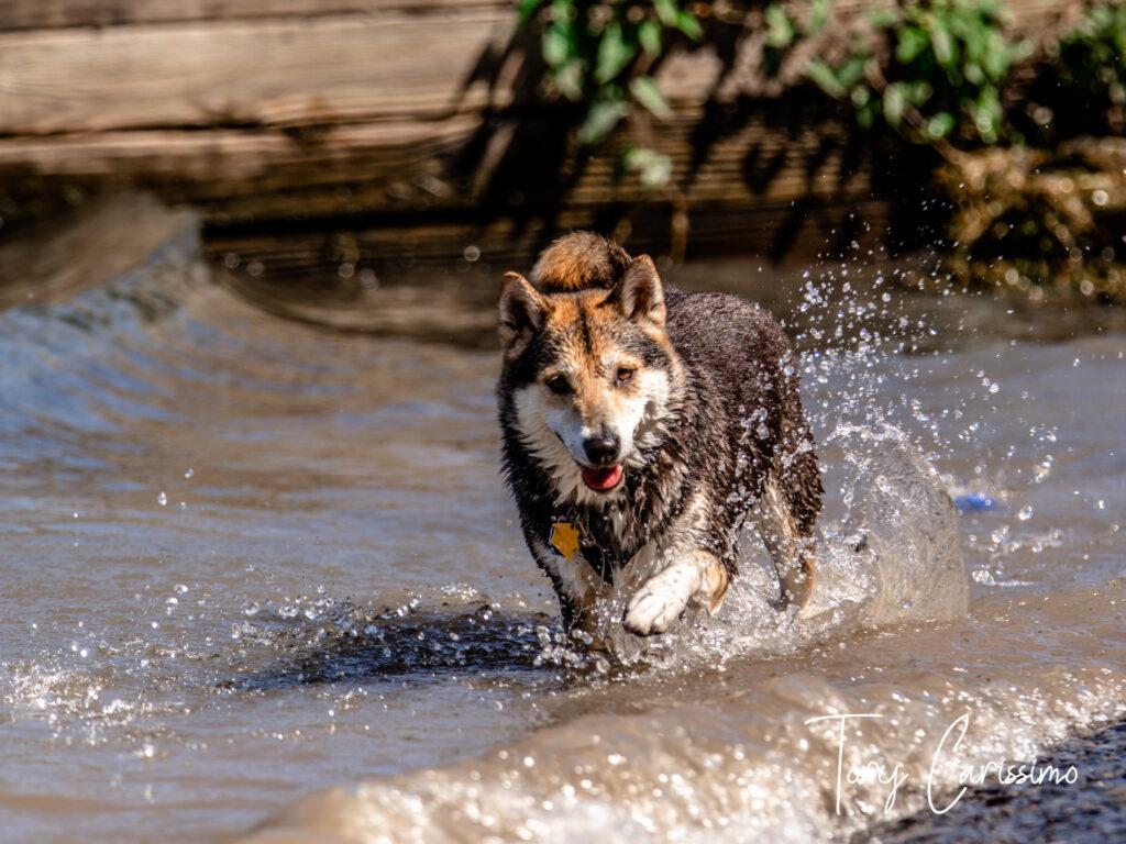 Canandaigua Lake Dog by Tory Carissimo